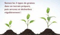 Planter les semences de l'apprentissage